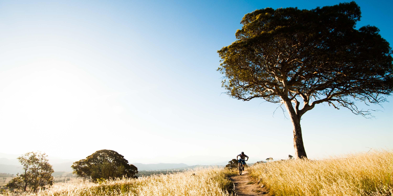 Mountain bike rider on trail beside tree