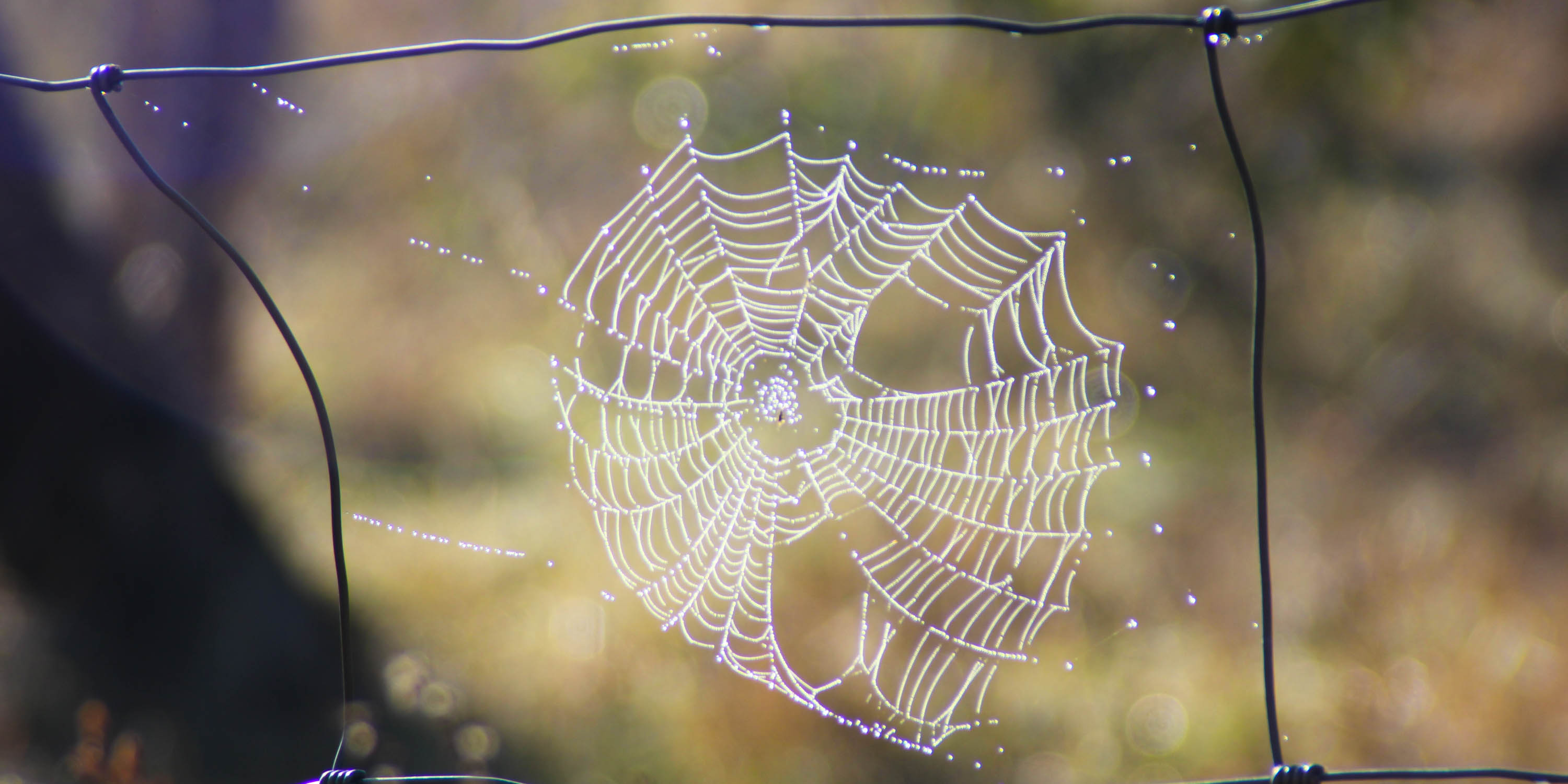 Spider Web with Dew